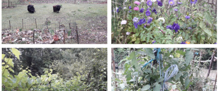 Invitation au jardin de l'Arborescence – Samedi 5 juin